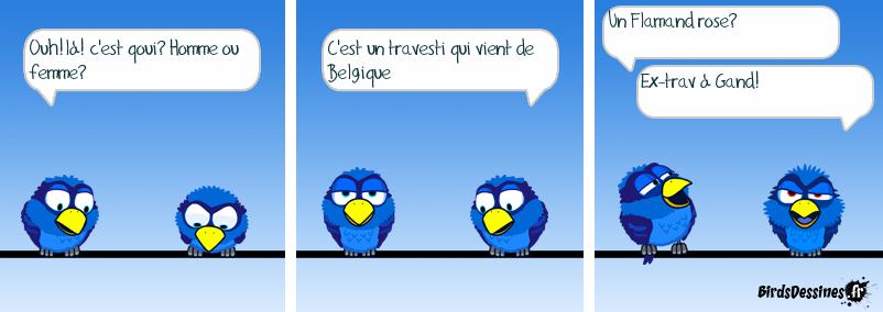 oiseau bi...colore