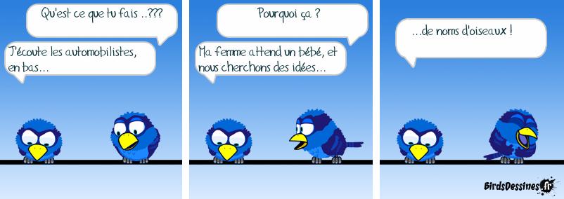 Noms d'oiseaux...
