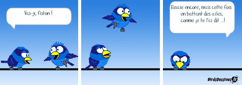 Oiseau-école...