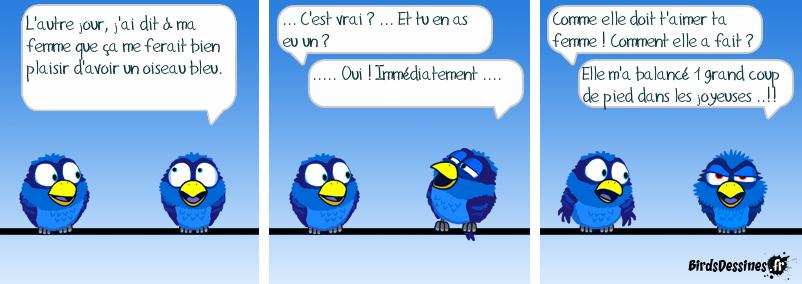Mon oiseau est bleu !