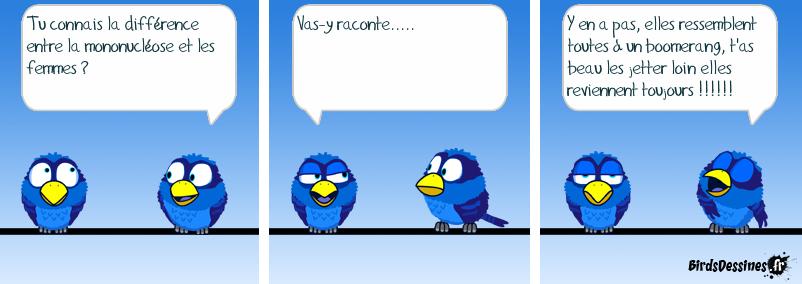 Birds machistes !!!
