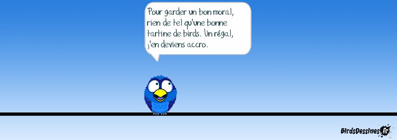 Accro birds