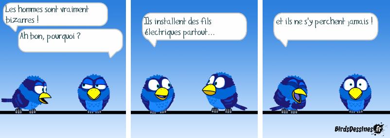 Logique aviaire