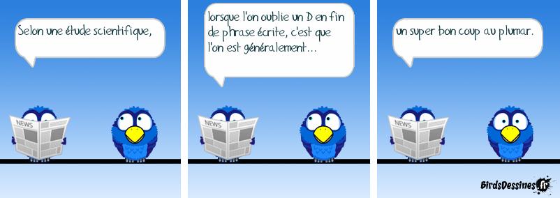 Adopte un nobobird.fr