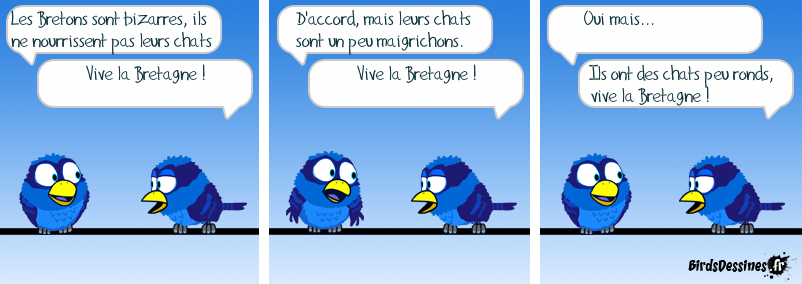 Matous parisiens… Matous chanceux.