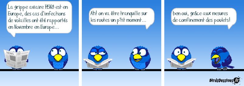 Aux abris les Birds!