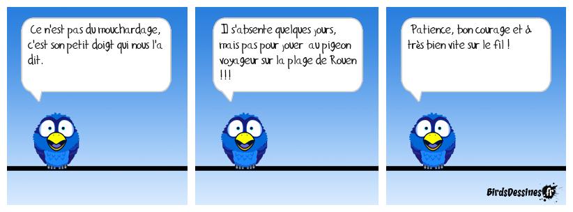 Quel est ce verbi bird ?