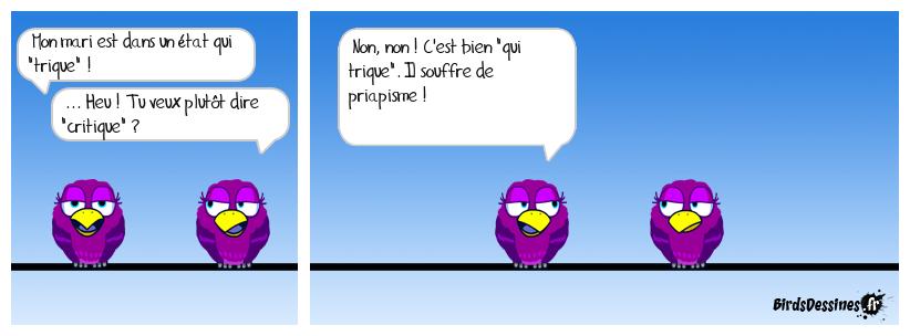 Je voudros augminter m'collection - Page 3 Blue-parrot_lorgane-erecte-t-il_1468668198