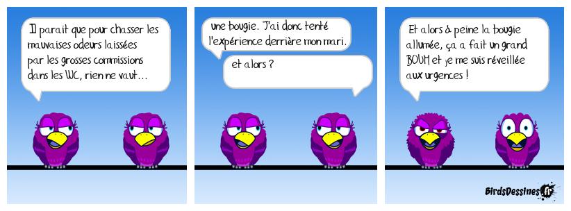 Les petits trucs de Sittelle Torchepot à éviter (les petits trucs, pas Sittelle !).