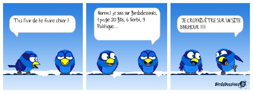 BIRD CHERCHE HUMOUR