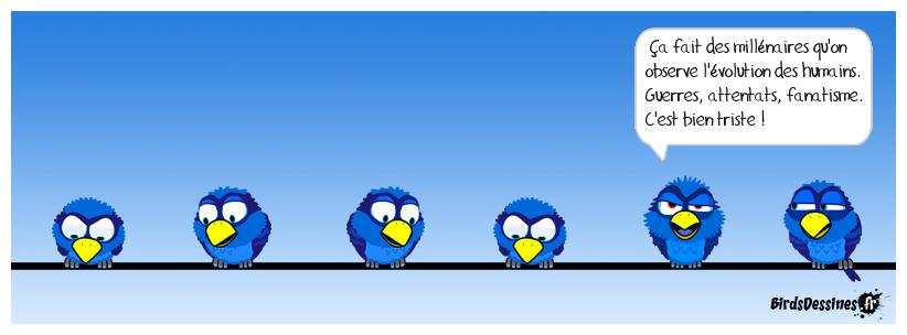 Sagesse de bird