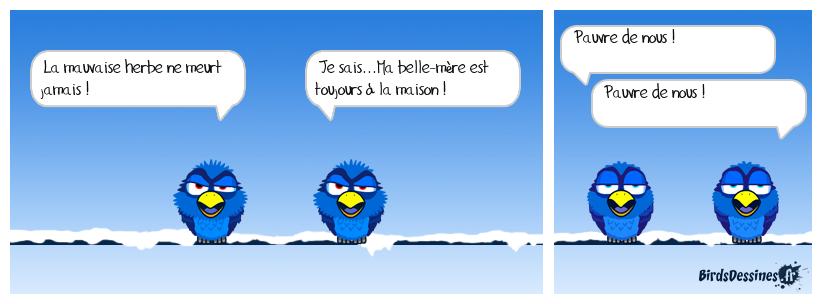 LA MAUVAISE HERBE...SUITE