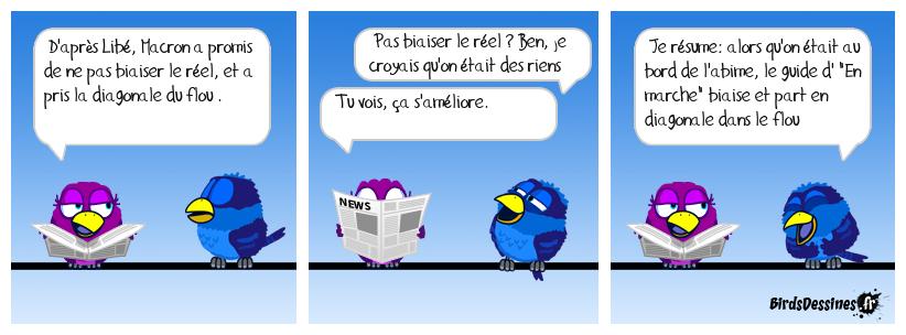L'avis des birds