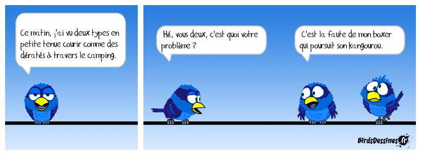 BD loup phoque