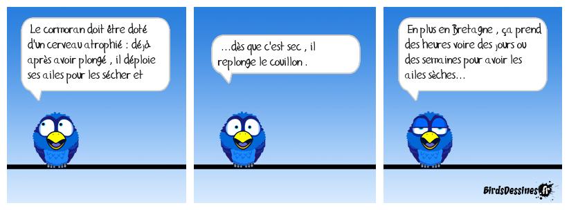 Bd ornithologique pour les zenfants...!!