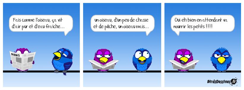 chanson pour oiseau
