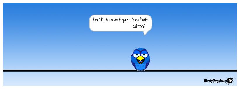 Pchit