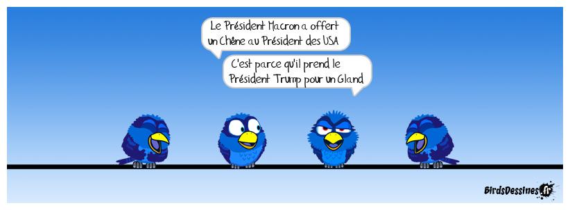 Pourquoi le Président Macron a offert un chêne au Président Trump........