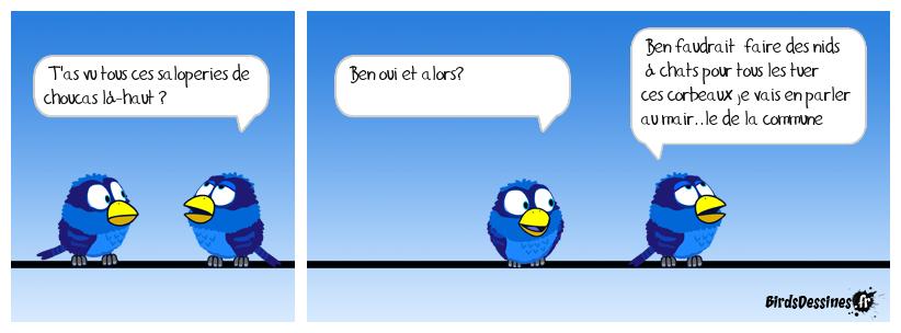 Chat perché