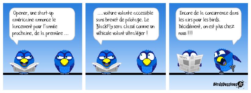 Les birds, une espèce menacée !