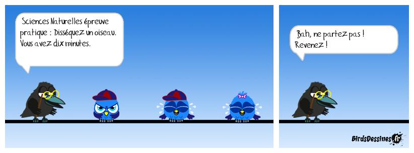Le Bac chez les birds