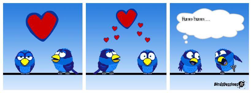 Essai chez les birds