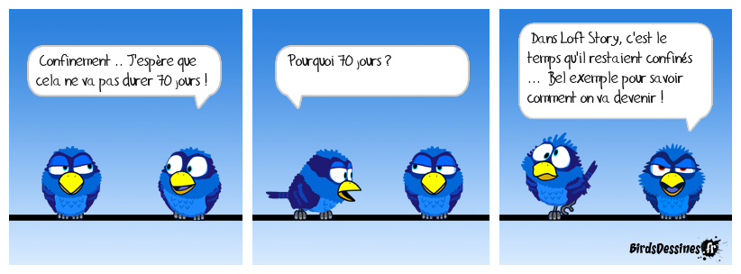loft birds