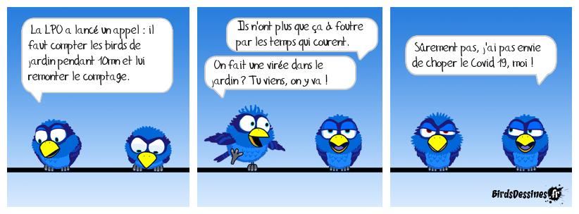 Birds de jardin