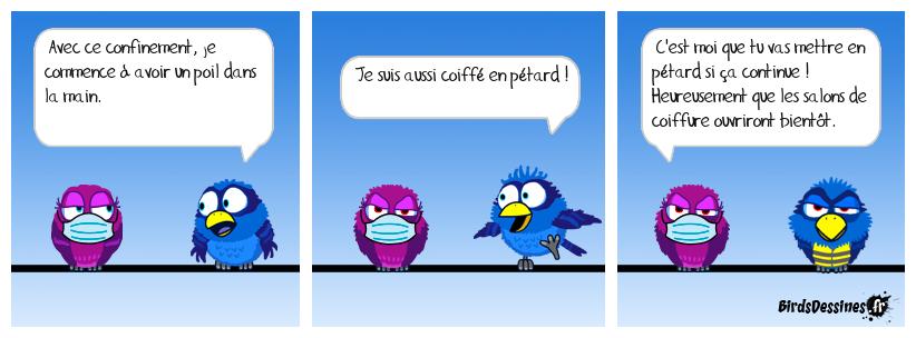 Histoire de poils.
