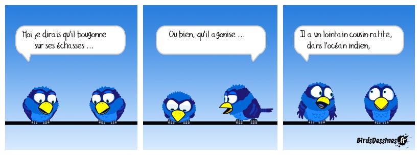 verbi ornitho