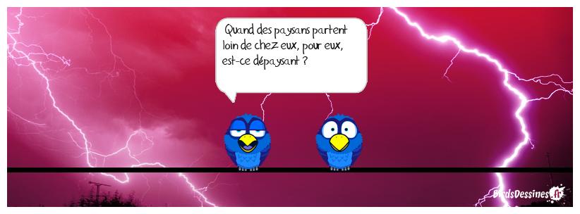 🐂 🐰 A votre avis 🐔 🐷