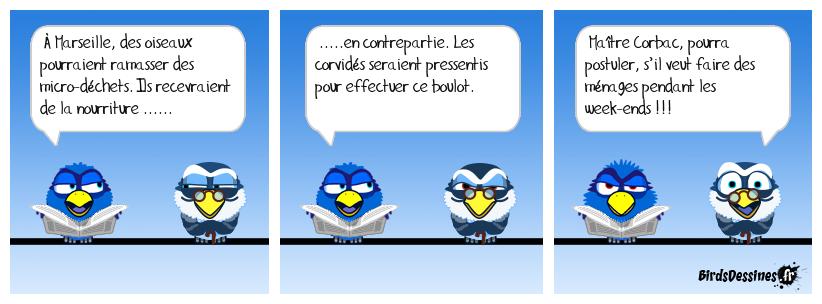 Birds ripeurs !