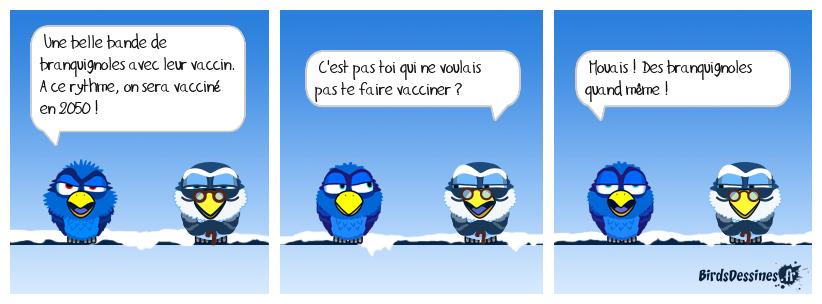 Brèves de birds 1