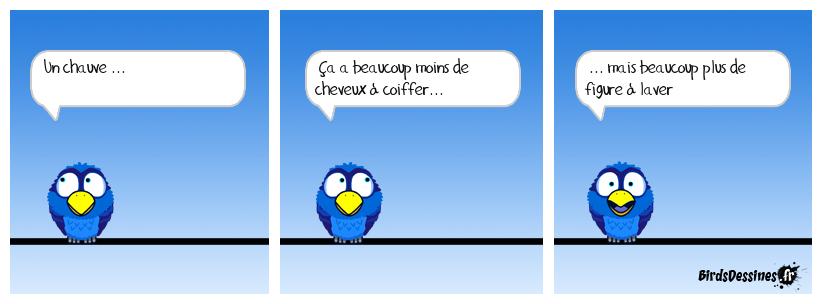 Chauve, suite