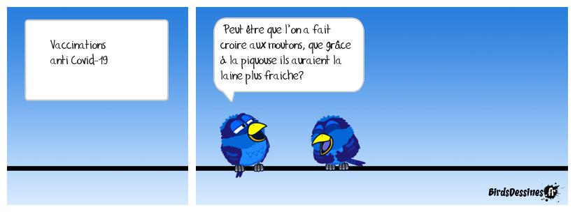 LA VACCINATION DES OVINS