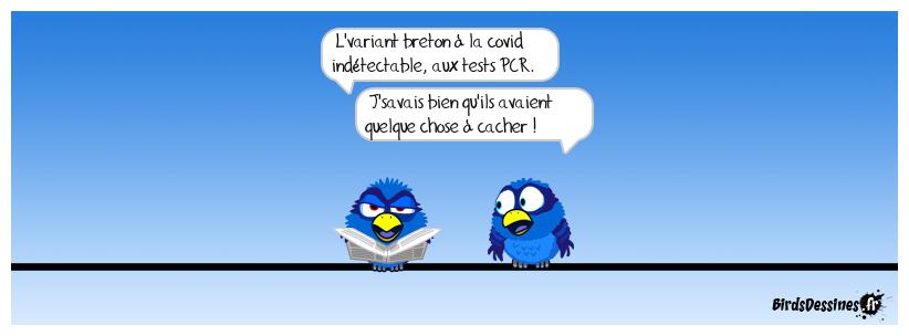 Les birds Pat-dhirson_car-tel-est-lbreton_1616521626