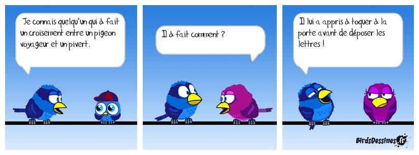 Pigeon et pivert