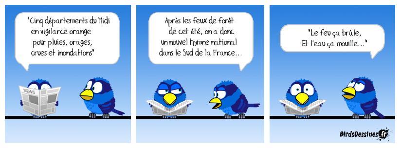 Sur le fil de l'actu 21: Tous les oiseaux volent sur le fil....